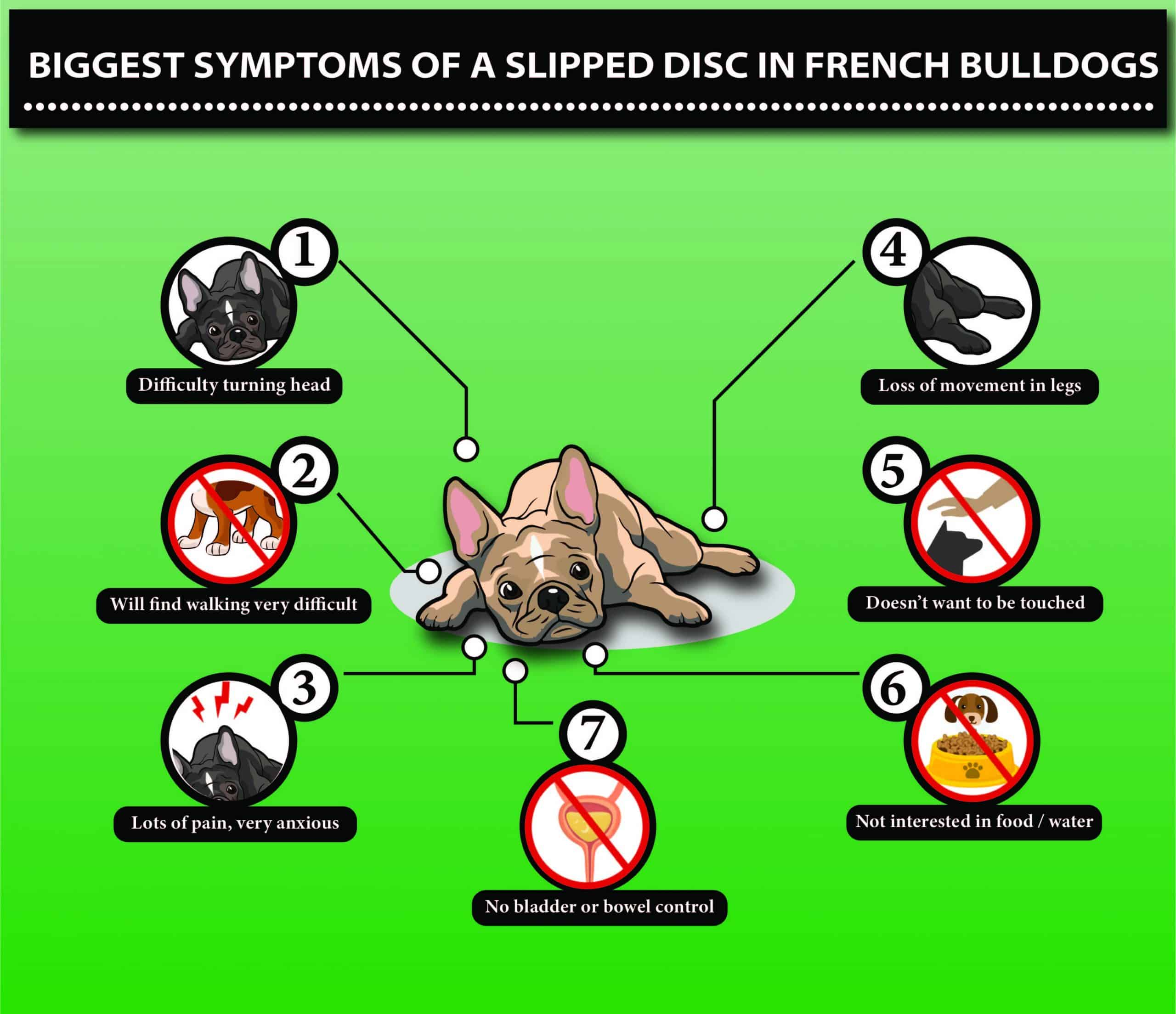 7 symptoms of slipped discs in French Bulldog